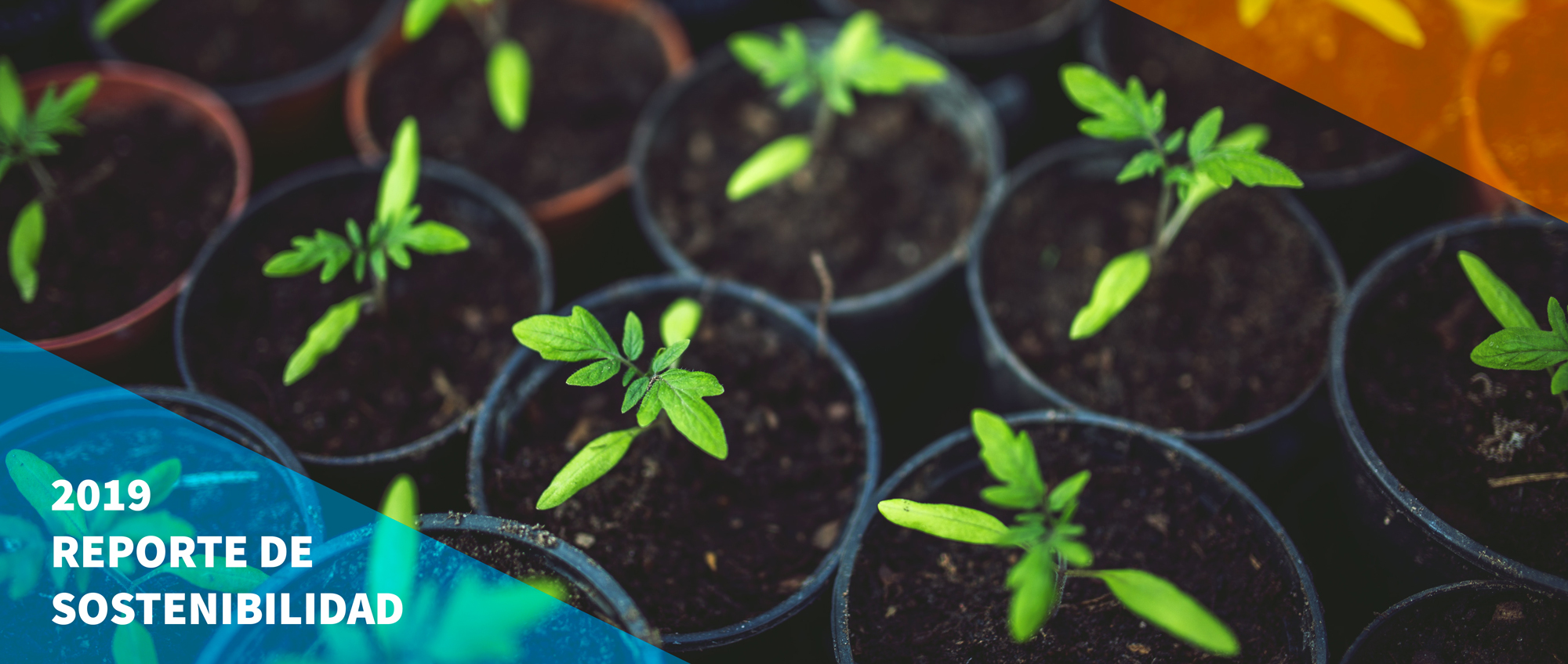 Customized Sustainability Reporting